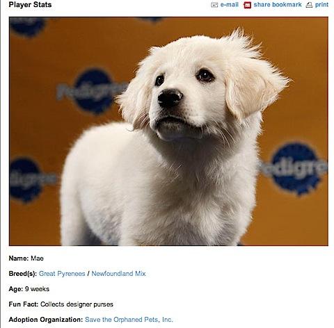 Mae Puppy Bowl.jpg